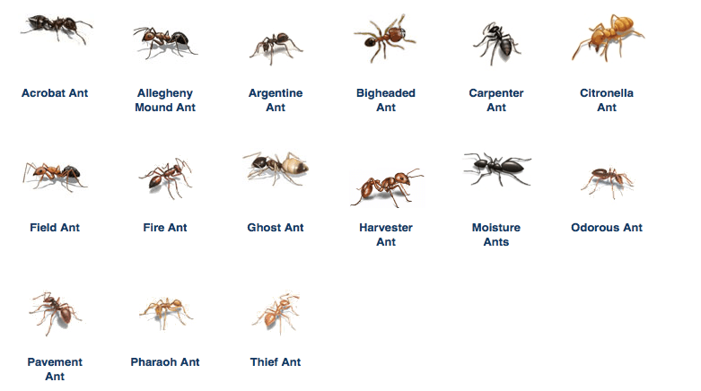 Ant Removal Best Defense Pest Control Hartford Connecticut