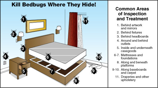 Bedbug Hide
