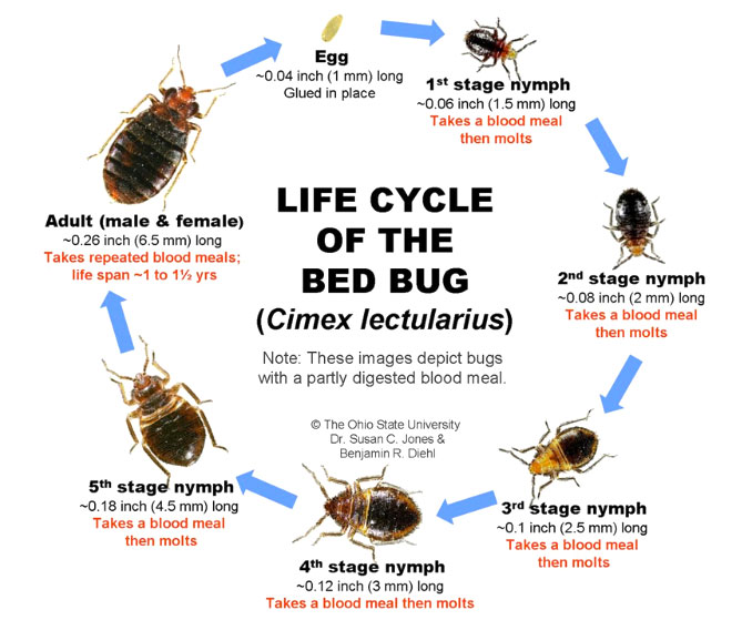 Best Way To Detect Bed Bugs