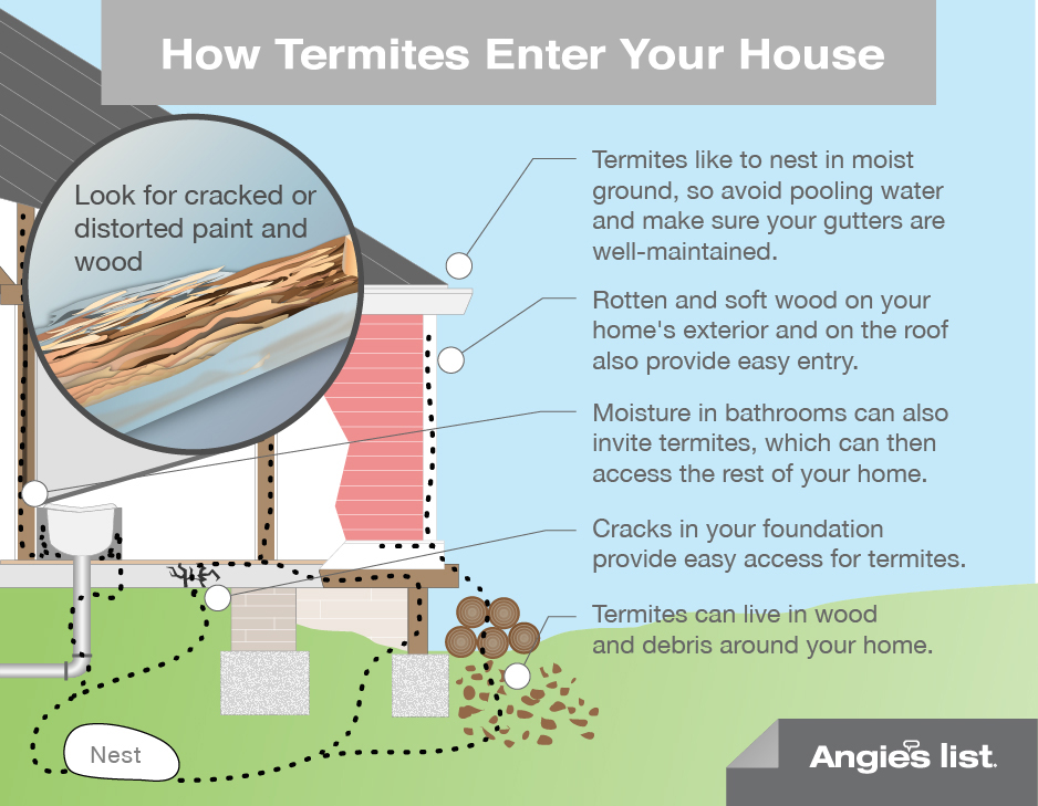 Termite extermination best defense pest control for How to keep spiders away from your bed